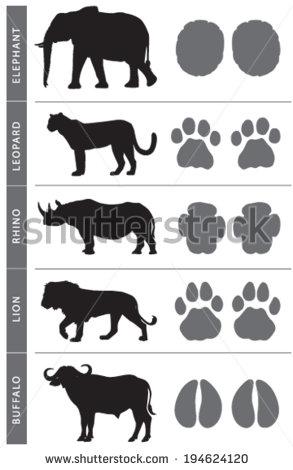stock-vector-africa-s-big-five-animal-tracks-elephant-lion-leopard-buffalo-and-rhino-194624120