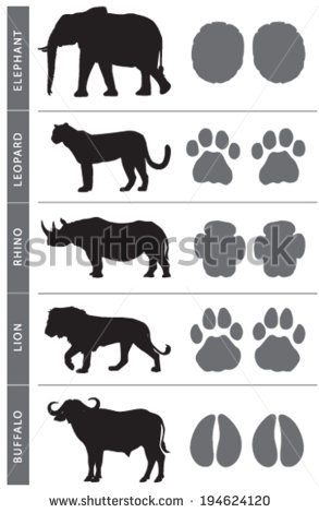 stock-vector-africa-s-big-five-animal-tracks-elephant-lion-leopard-buffalo-and-rhino-194624120